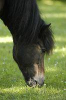 Pony beim fressen
