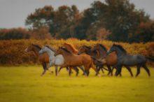 Pferde auf der Herbstweide