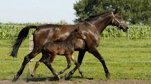 Weidezaun Pferde