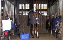 Coldcare - Kühlkompressen und Kühlbandagen für Pferde