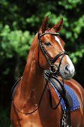 Passier Stirnriemen hellblauer Strass Pferd