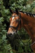 Passier Stirnriemen Lack und Strass Pferd